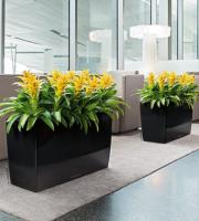 озеленение офисов и бизнес-центров