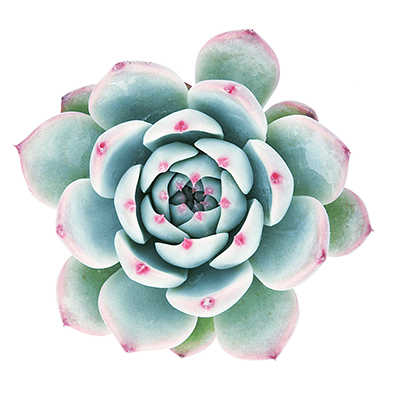 уход за офисными цветами. растениями
