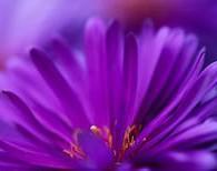 астрология цветов