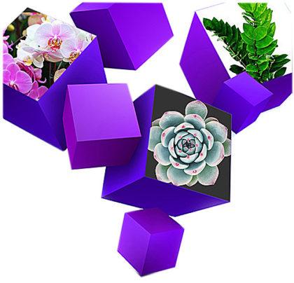 подарки при заключении договора на уход за цветами