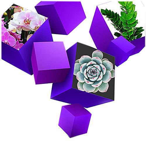 уход за растениями в офисах -подарки клиентам