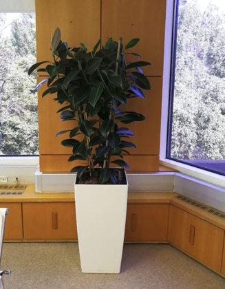 озеленение офиса портфолио