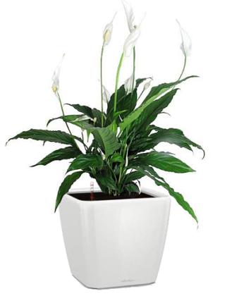 растения в аренду