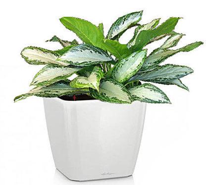 аренда растений москва