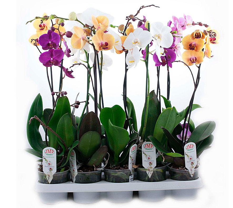 енение офисов обслуживание цветов