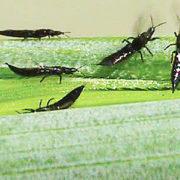черные летающие насекомые перелетают на здоровые цветы