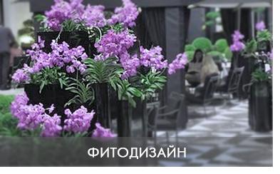 озеленение офисов обслуживание цветов