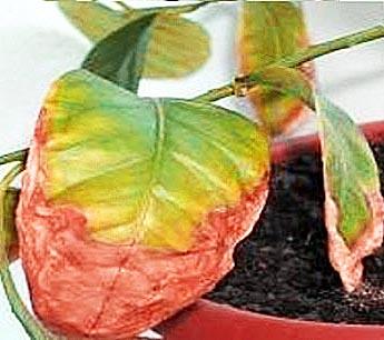 болезни комнатных растений