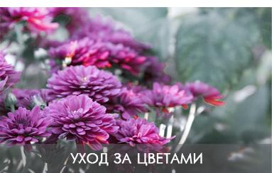 uhod_za_cvetami