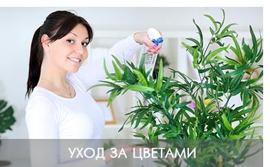 озеленение офиса обслуживание цветов