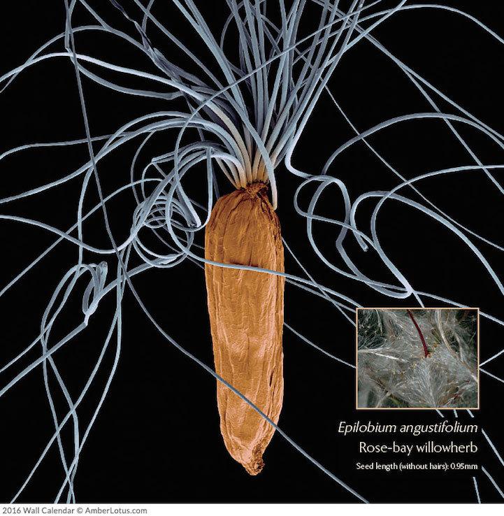 растения под микроскопом -