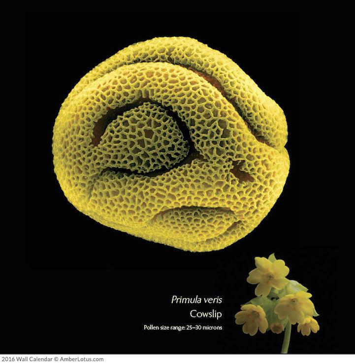 растения под микроскопом