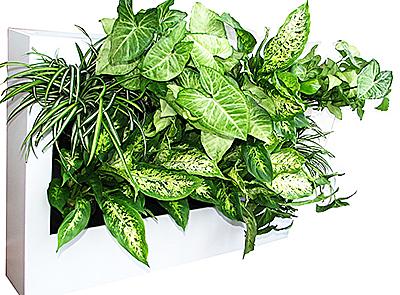 уход за растениями, озеленение офиса