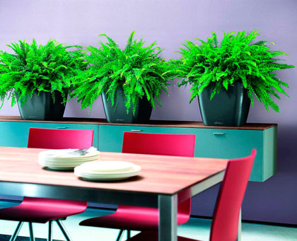 озеленение офисов интерьеров уход за растениями