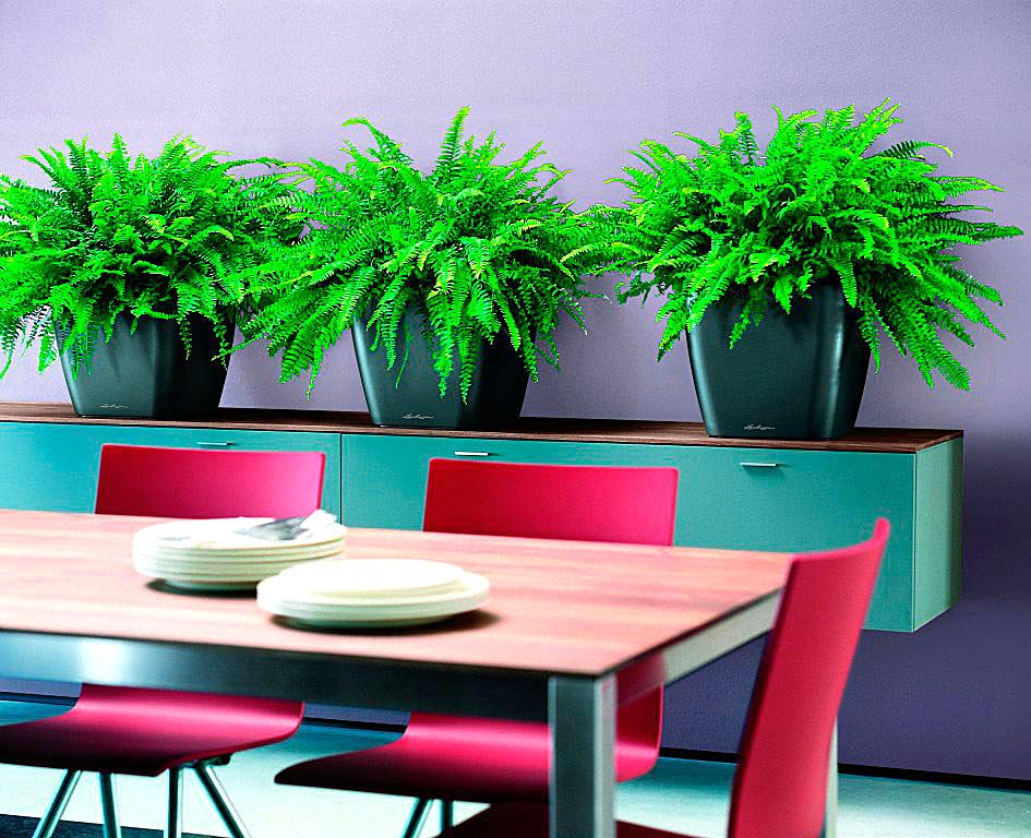 озеленение офисов уход за растениями