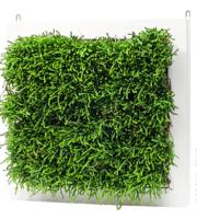 фитостены — зеленые стены, зеленые перегородки
