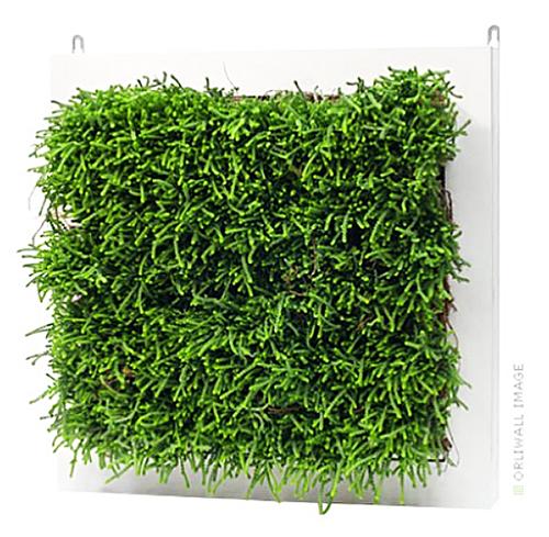 фитостены - зеленые стены, зеленые перегородки