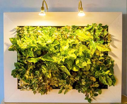 фитокартины из растений и мха