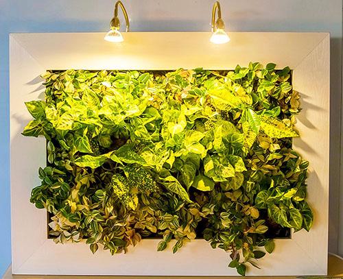 фитокартины картины из растений с подсветкой