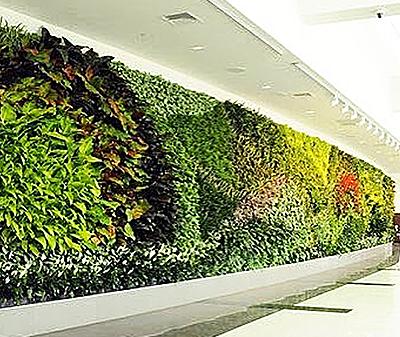 фитостены и вертикальное озеленение