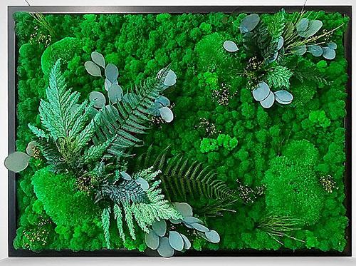 живые картины из мха и растений