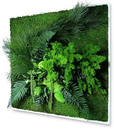 панно картины из мха и растений купить
