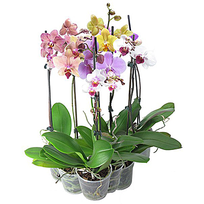 комнатные цветы в фитодизайне