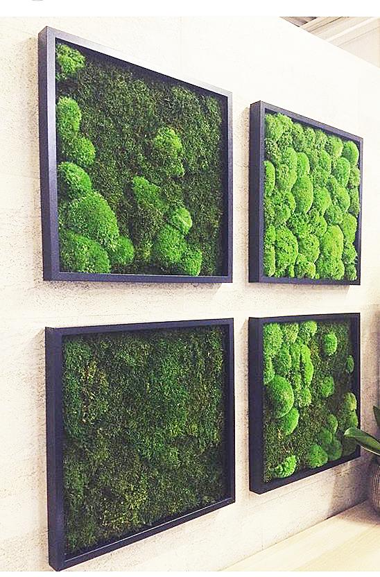 фитокартины из мха и растений