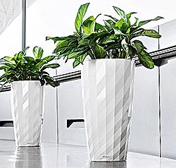 обслуживание растений в офисе