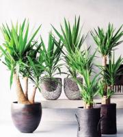 озеленение помещений живыми растениями