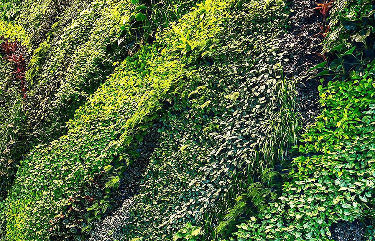 стены зеленые живые, вертикальное озеленение