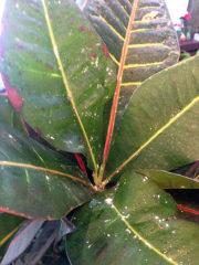 болезни растений цветов