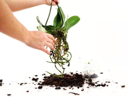 посадка растений в горшки профессионально