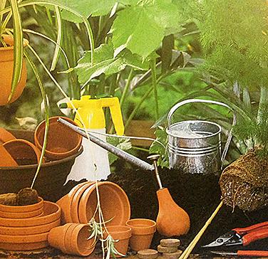 пересадка растений цветов