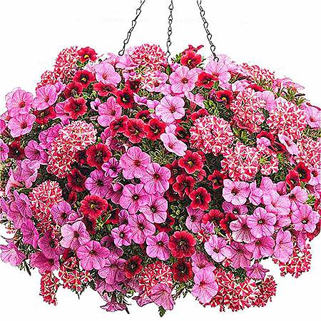 посадка уличных цветов -услуга флориста