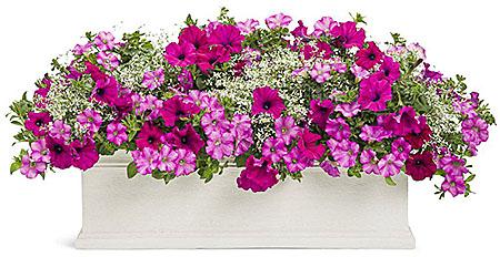 посадка цветов в ящики на окна, террасы- уличное озеленение