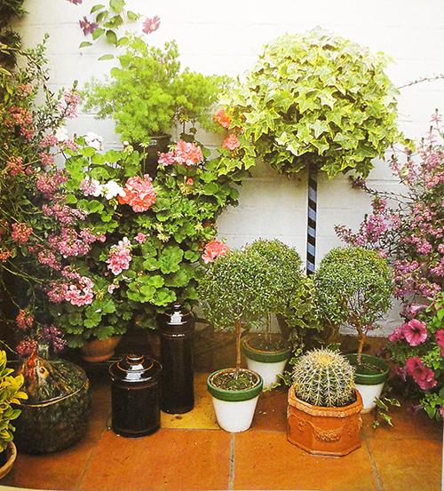 озеленение домов и помещений
