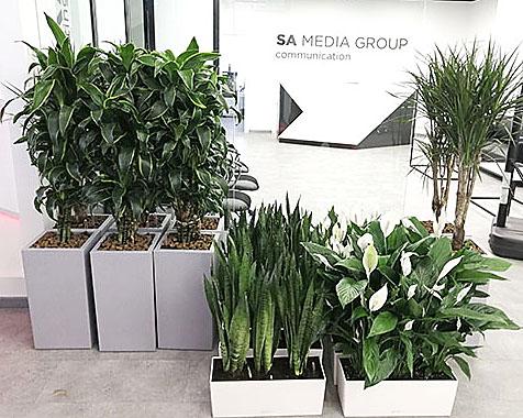 посадка горшечных растений
