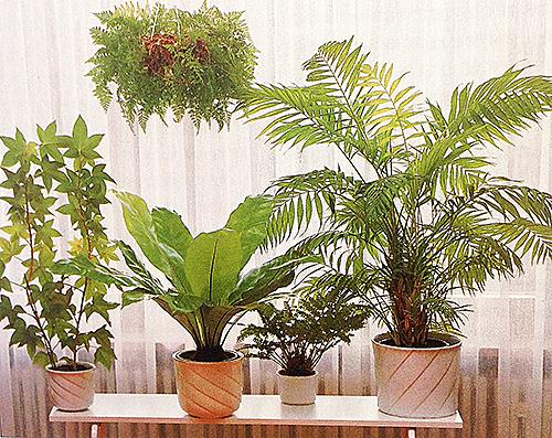 специалист по уходу за растениями