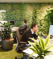 озеленение офиса — москва