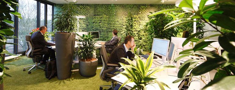 озеленение офиса - Москва