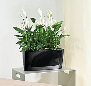 озеленение офиса, уход за офисными растениями