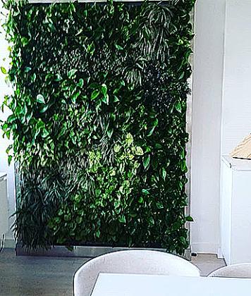 растения для озеленения