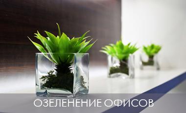 озеленение офиса, озеленение компаний, озеленение корпоративным клиентам