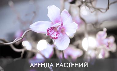 аренда комнатных горшечных растений от 1000 руб.