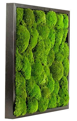 озеленение мхом картина из мха