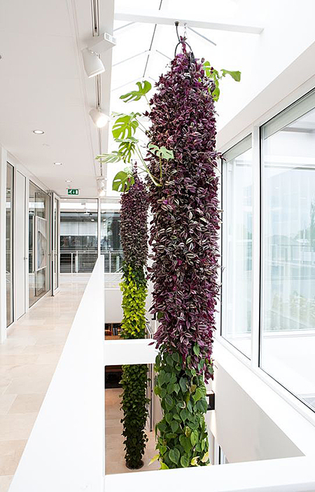 колонны из растений