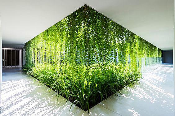 вертикальеное озеленение -Москва
