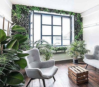 вертикальный сад из растений
