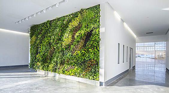 вертикальное озеленение организаций